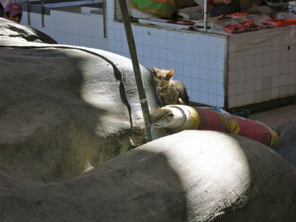 kitten in San Camilo market