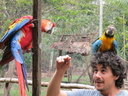 Anthony with macaws