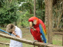 Ara the macaw eating a peanut